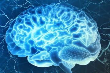 Les sportifs ont-ils un cerveau plus développé ?