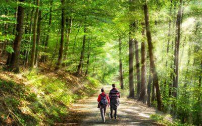 Jogging ou randonnée en forêt : attention aux tiques
