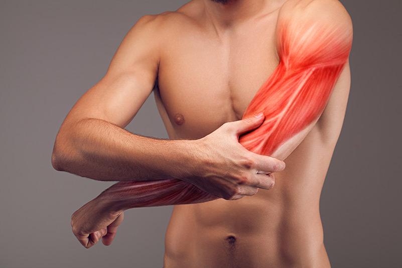 les-differentes-fibres-musculaires comment cela fonctionne